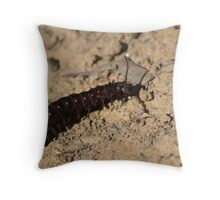Pipevine swallowtail caterpillar Throw Pillow