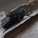 Insect-Bug Time by photoj