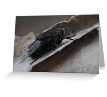 Insect-Bug Time Greeting Card