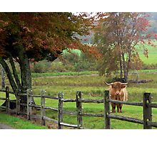 Farm Scene Photographic Print