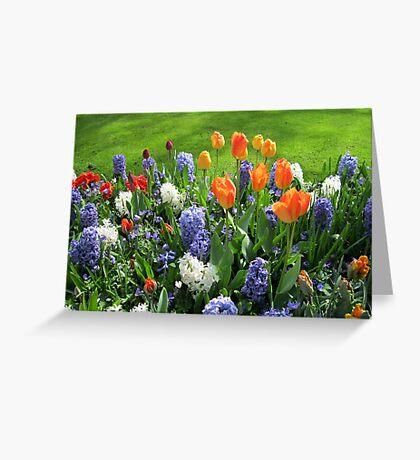 Orange Tulips and Blue Hyacinths - Keukenhof Gardens Greeting Card