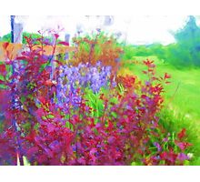 Fanciful Fence Row Photographic Print