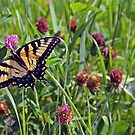 Busy Butterfly by Mary Fox