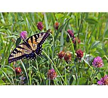 Busy Butterfly Photographic Print