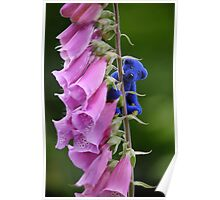 Blue Bear climbs the Foxgloves Poster