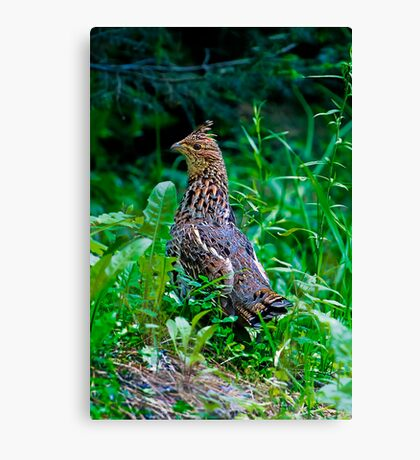 Mamma Partridge Canvas Print