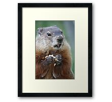All this work and no nut? Framed Print