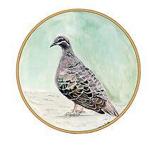 Bronze Winged Pigeon, Birds of Hepburn, 2011 by Liz Archer