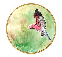 Galah, Birds of Hepburn, 2011 by Liz Archer