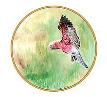 Galah, Birds of Hepburn, 2011 by Liz Archer