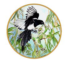 Magpie, Birds of Hepburn, 2011 by Liz Archer