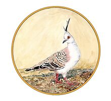 Crested Pigeon, Birds of Hepburn, 2011 by Liz Archer