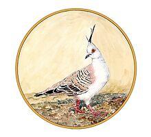 Crested Pigeon, Birds of Hepburn, 2011 by Liz Archer