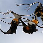 Hello Bats by Hannah Ruth
