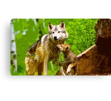 Wild nature - wolves Canvas Print