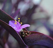 Purple perfection by Karen01