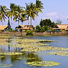 Lily Pond - Candidasa - Bali by Karen Stackpole