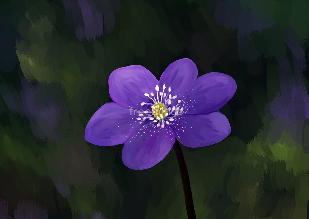 Hepatica by freeminds