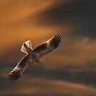 Sunset Whistling by byronbackyard