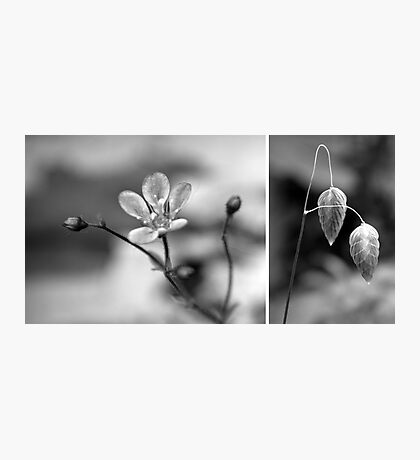 Nature in black and white Photographic Print