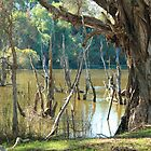 Bird Sanctuary, Bayswater, Western Australia #4 by Elaine Teague