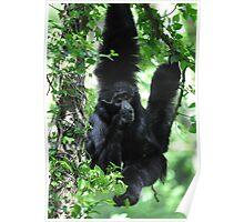 Hanging Around Gibbon Style Poster