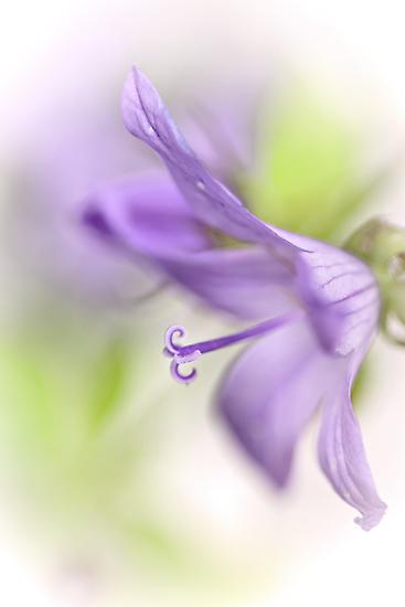 Dreamy flowers... by Bob Daalder