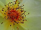 Yellow Beauty by KatarinaD