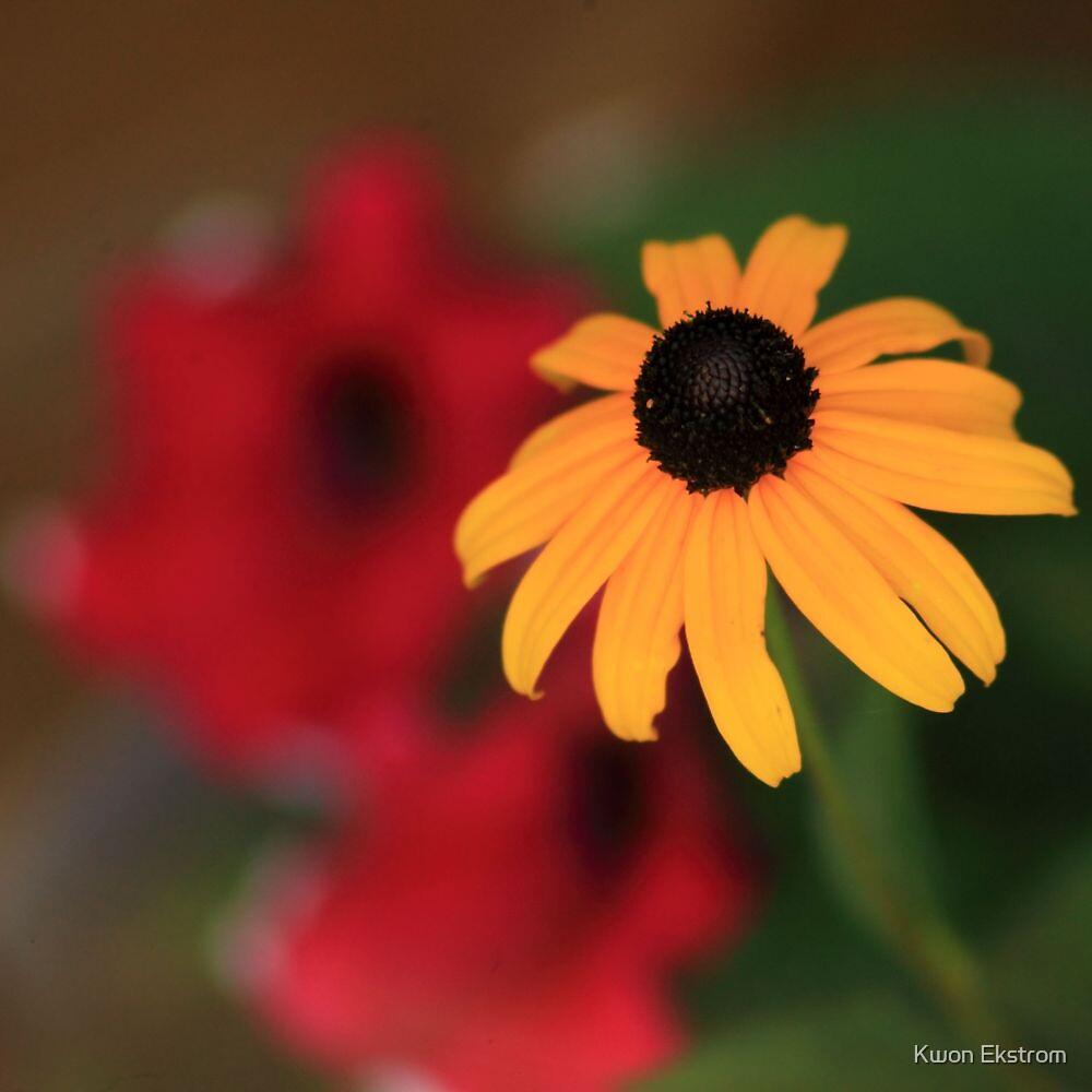 Yellow in contrast by Kwon Ekstrom