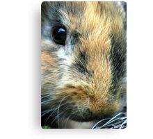 The bun Canvas Print