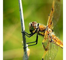 I'm no dragon but I am pretty fly Photographic Print
