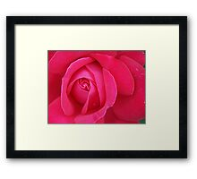 Perfect Rose Framed Print