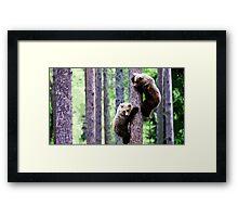 Wild nature - bears Framed Print