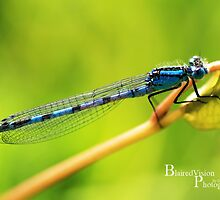 Dragonfly by BlairedVision