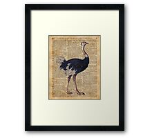 Ostrich Big Bird Animal Vintage Dictionary Illustration Framed Print