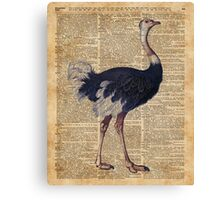 Ostrich Big Bird Animal Vintage Dictionary Illustration Canvas Print