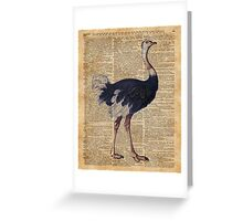 Ostrich Big Bird Animal Vintage Dictionary Illustration Greeting Card