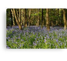 Bluebells in Sarratt Wood Canvas Print