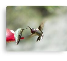 Hummingbird Sword Fight Canvas Print
