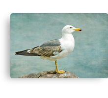 Lesser Black-backed Gull Canvas Print