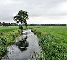 Stream and Tree in Summer by ienemien