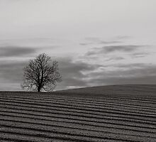 Tree and ploughed field by peteton