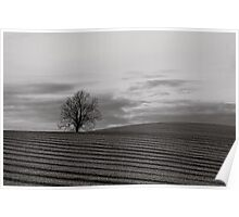Tree and ploughed field Poster