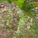 Lettuce Have Some Rain by Lynn Gedeon