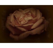 Vintage Rose Photographic Print