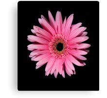 Pink Gerber Daisy Portrait Canvas Print