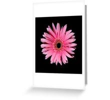 Pink Gerber Daisy Portrait Greeting Card