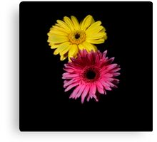 Yellow & Pink Gerber Portrait. Canvas Print