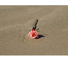 A single rose on the beach Photographic Print