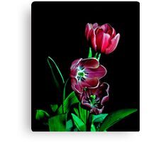 Tulip Portrait. Canvas Print